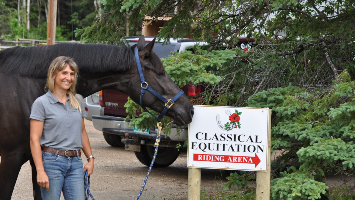 welcome to classical equitation!