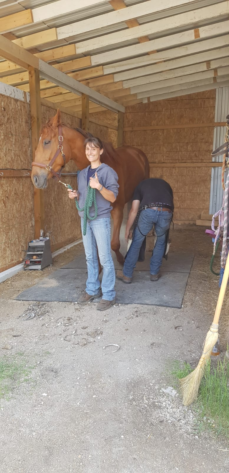 holding for the farrier