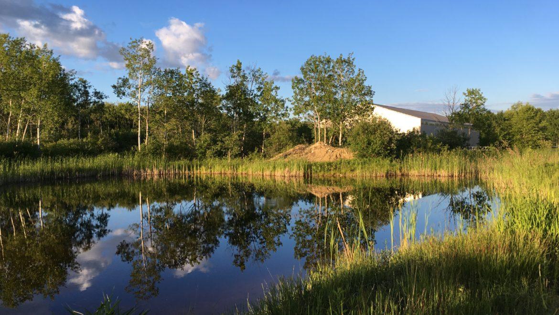 pond behind arena